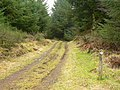 Forest track - geograph.org.uk - 120694.jpg