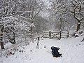 Foxlane Plantation - geograph.org.uk - 1632484.jpg