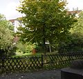 Frankfurt-Bockenheim Schanzenbach-Gelände 20.jpg