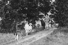 Blue Cattle Dog walking down a driveway ahead of two boys with a toy wagon, and a man and a women in a horse-drawn cart, 1902
