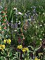 Front garden - Flickr - peganum (15).jpg