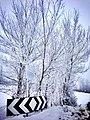 Frost (26410287).jpeg