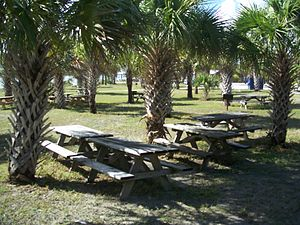 Fort Pierce Inlet State Park - Image: Ft Pierce FL Fort Pierce Inlet SP picnic 01