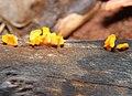 Fungi 5 REFON.JPG