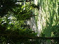 FvfMariaAuroraChurch7696 03.JPG