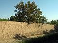 Garden Way - Wall - trees - streamlet - 17 Shahrivar st - Nishapur 02.JPG
