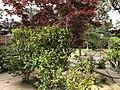 Garden of former residence of Aoki Shusuke 2.jpg