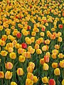 Garden of the Provinces and Territories - Tulip Festival - 2.jpg