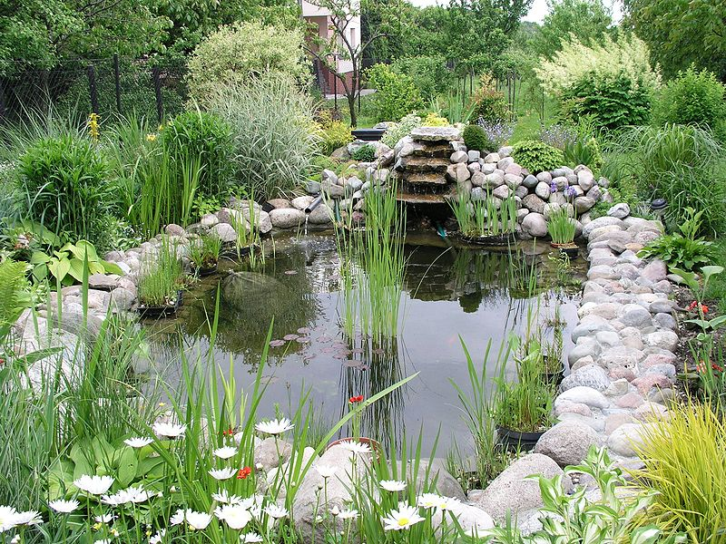 File garden pond wikimedia commons for Poisson de bassin exterieur