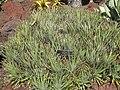 Gardenology.org-IMG 2192 hunt0903.jpg