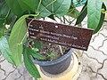 Gardenology.org-IMG 8007 qsbg11mar.jpg
