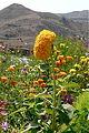 Garni - Armenia (2910639676).jpg