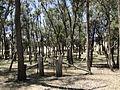 Gate Barkly Pioneer Cemetery.jpg