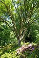 General view - VanDusen Botanical Garden - Vancouver, BC - DSC06844.jpg