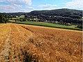Getreidefeld bei Bächlingen - panoramio.jpg