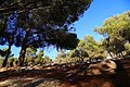 Ghamadan - panoramio.jpg