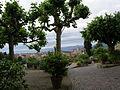 Giardino delle rose di firenze 11.JPG