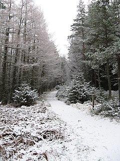 Glenmore Forest Park park in Highland, Scotland, UK