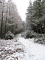 Glenmore Forest - geograph.org.uk - 319334.jpg