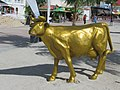 Golden Cow (49874432282).jpg