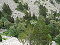 Gorges de Núria des del cremallera P1030259.JPG