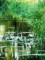 Grążele na Widawce - panoramio.jpg