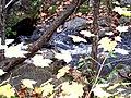 Grant's Creek (Tay River) at Allan's Mill, October, 2009 (5020605815).jpg