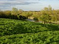 Grantchester Meadows and River Cam - geograph.org.uk - 778656.jpg