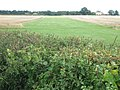Grass Airstrip near Frid Farm - geograph.org.uk - 1427856.jpg