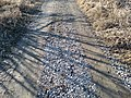 Gravel road with loose gravel in the middle and sunken gravel in tracks.jpg