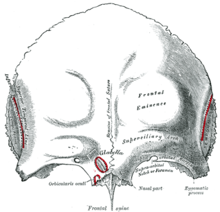 Orbital part of frontal bone