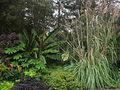 Green Spring Gardens Park - plants by parking lot.JPG