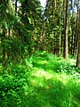 Green forest - Flickr - Stiller Beobachter (1).jpg