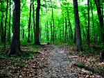 Greenfield park forest - milwaukee.jpg