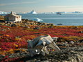 Greenland scoresby-sydkapp2 hg.jpg