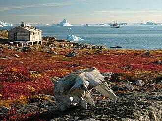 Tundra - Tundra in Greenland