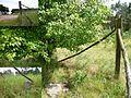Grenzstein 210 KS KP.jpg