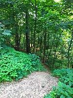 Gryshko Botanical Garden (May 2019) 02.jpg