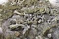 Guba mass grave (9).JPG