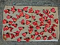 HK Sunlight drying for tea Red cotton Bombax Ceiba 木棉花 flowers Mar-2013.JPG