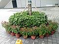 HK TKL 調景嶺 Tiu Keng Leng 香港知專設計學院 HKDI 李惠利工業學院 LWL campus June 2018 LGM 14 green trees n plants 02.jpg