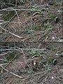 Habitat Fichtensteinpilz 02.jpg