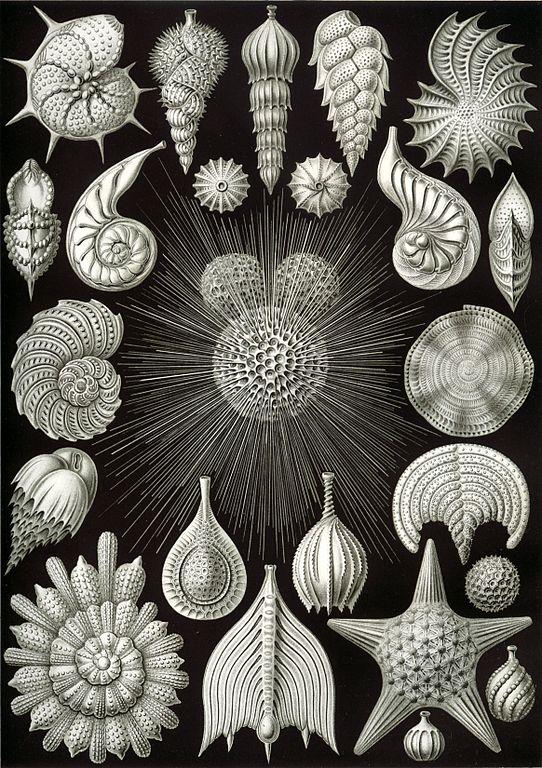 File haeckel wikimedia commons - Papier peint art nouveau ...