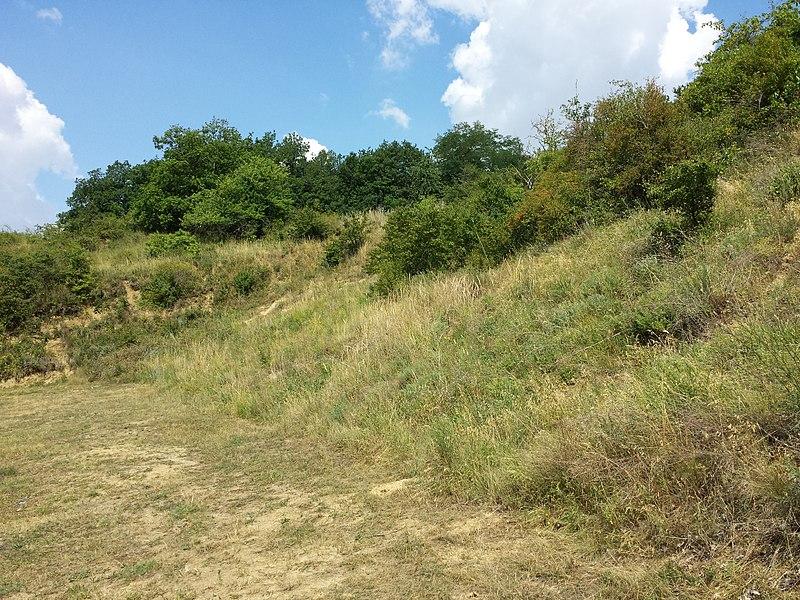 File:Halbtrockenrasen und Weingärten nördlich Oberthern sl6.jpg