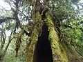 Hallow tree.jpg