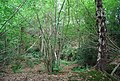 Harrison's Rocks Wood by the Tunbridge Wells Circular Path - geograph.org.uk - 1493139.jpg