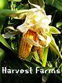 Harvest Farm.jpg