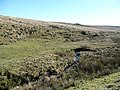 Head stream of the Meavy - geograph.org.uk - 716239.jpg