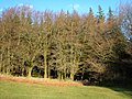 Heathercombe woods - geograph.org.uk - 283013.jpg