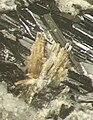 Hedenbertite - Poudrette quarry, Mont Saint-Hilaire, Quebec, Canada.jpg